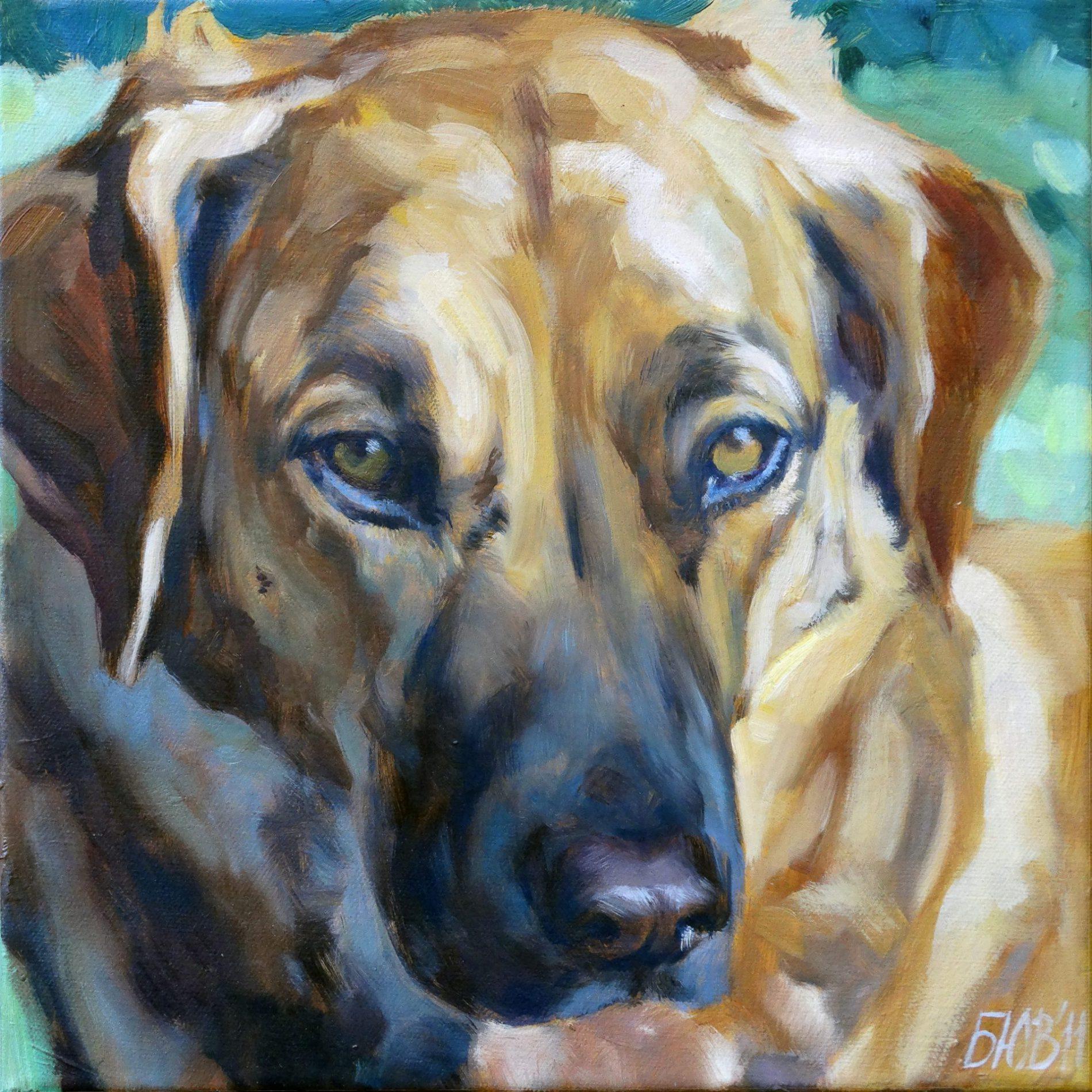 Gemälde von Julia Belot: Tierportrait, Max, Öl auf Leinwand, 30 cm x 30 cm, 2011