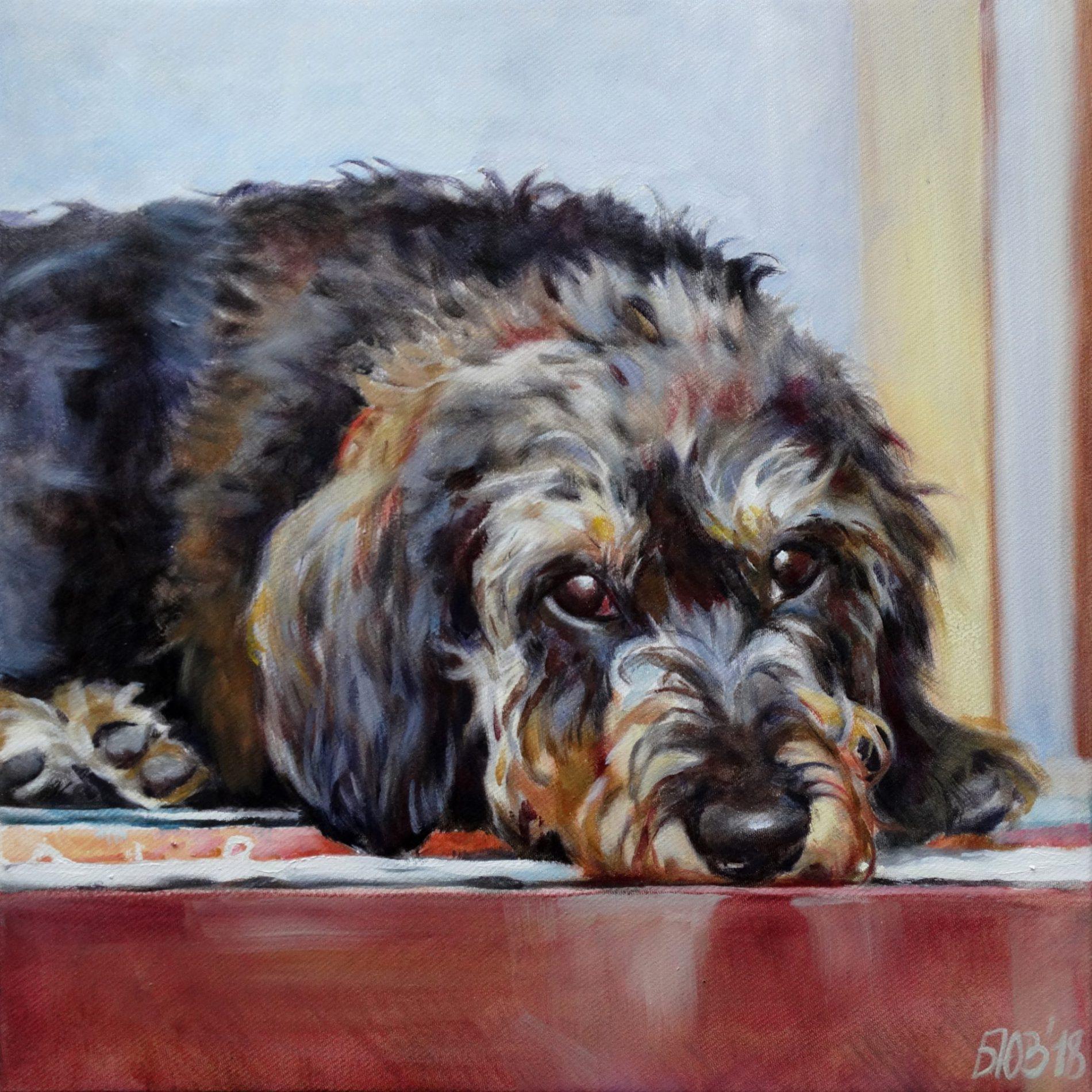 Gemälde von Julia Belot: Tierportrait, Ricca, Öl auf Leinwand, 40 cm x 40 cm, 2018