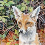 Gemälde von Julia Belot: Junger Fuchs, Öl auf Leinwand, 40 cm x 40 cm, 2020
